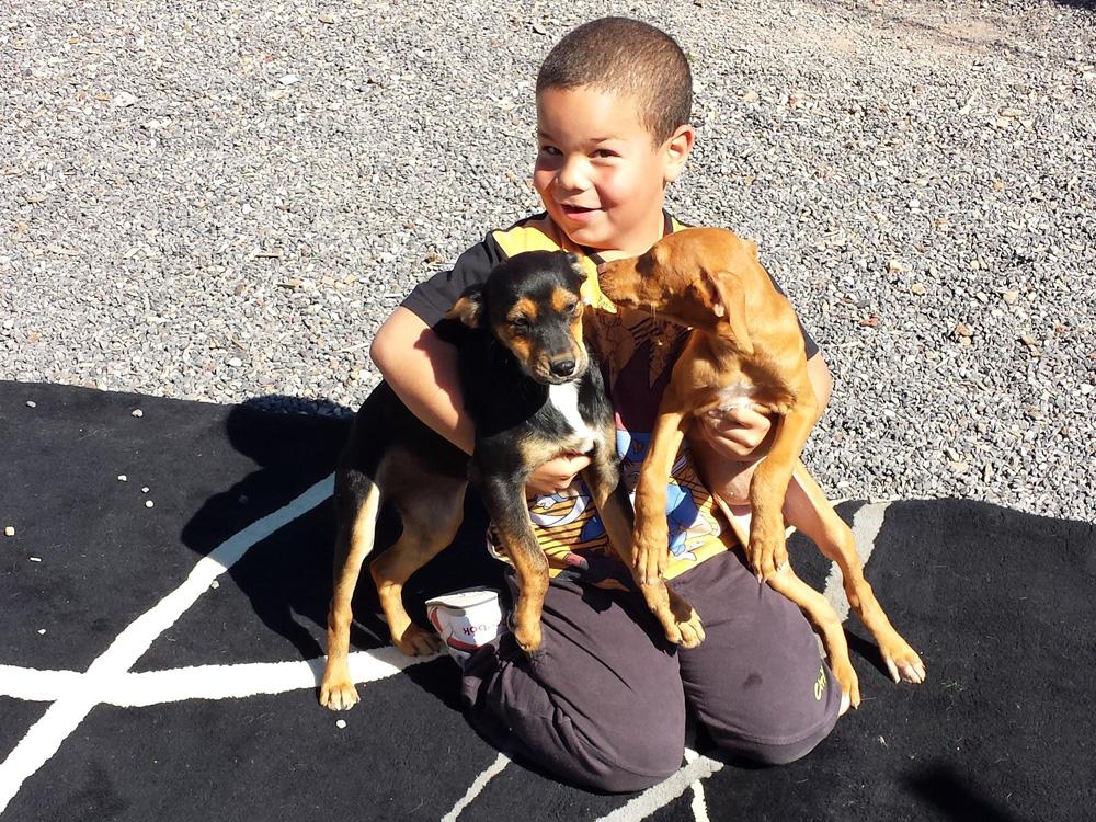 Am Wochenende gibt es oft Themenveranstaltungen für Kinder, zum Beispiel den Verwöhne-einen-Hund-Tag.