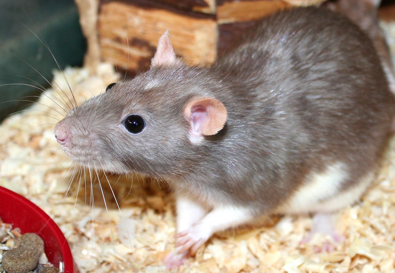 Vorsicht Rattengift Rodentizide Unkontrollierbar Und Lebensgefahrlich Aktion Tier Menschen Fur Tiere E V