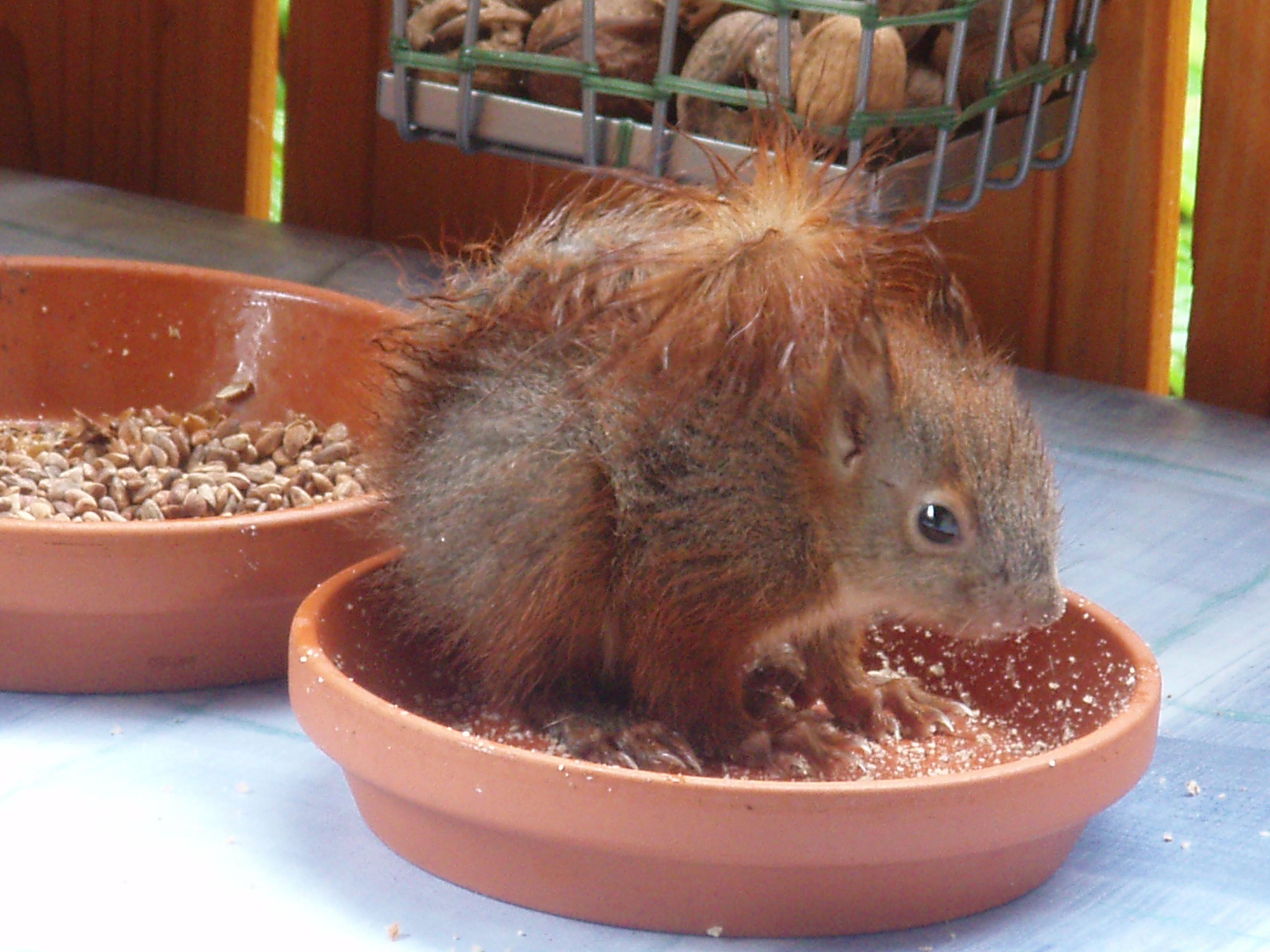 Nicht jedes Eichhörnchen braucht menschliche Hilfe...