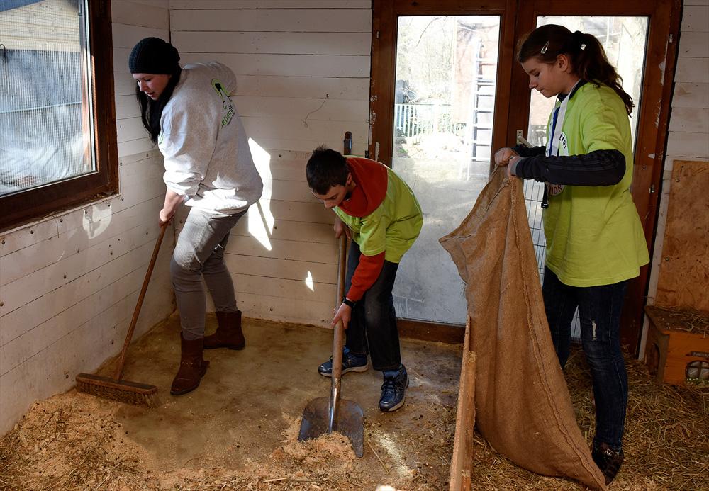 Schüler säubern das Meerschweinchenhaus.