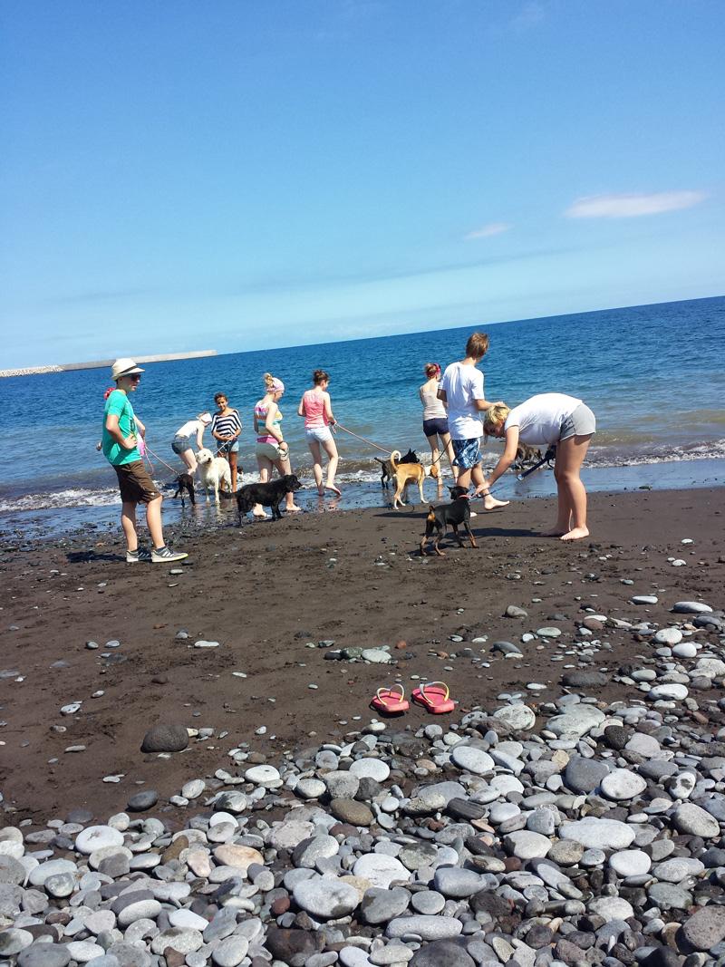 Strandspaziergang mit Tierheimhunden