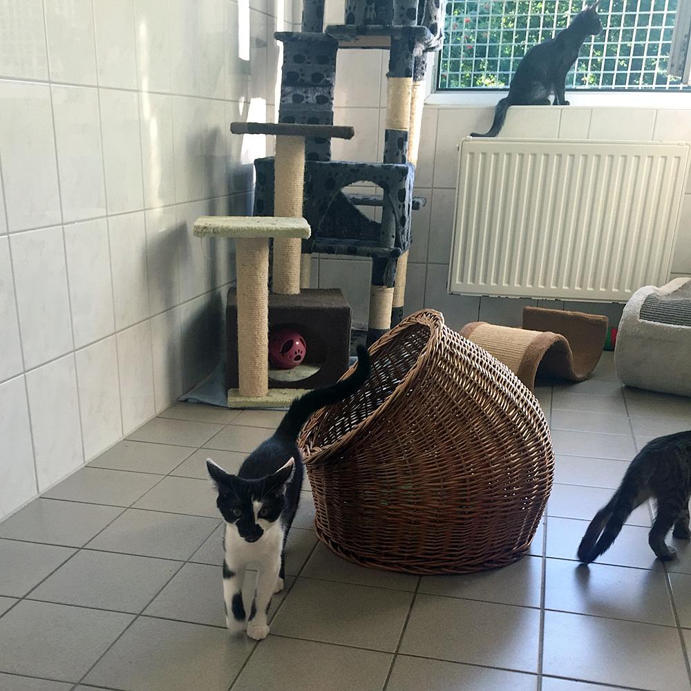 Katzenhaus des Tierheims 'aktion tier Crimmitschau'