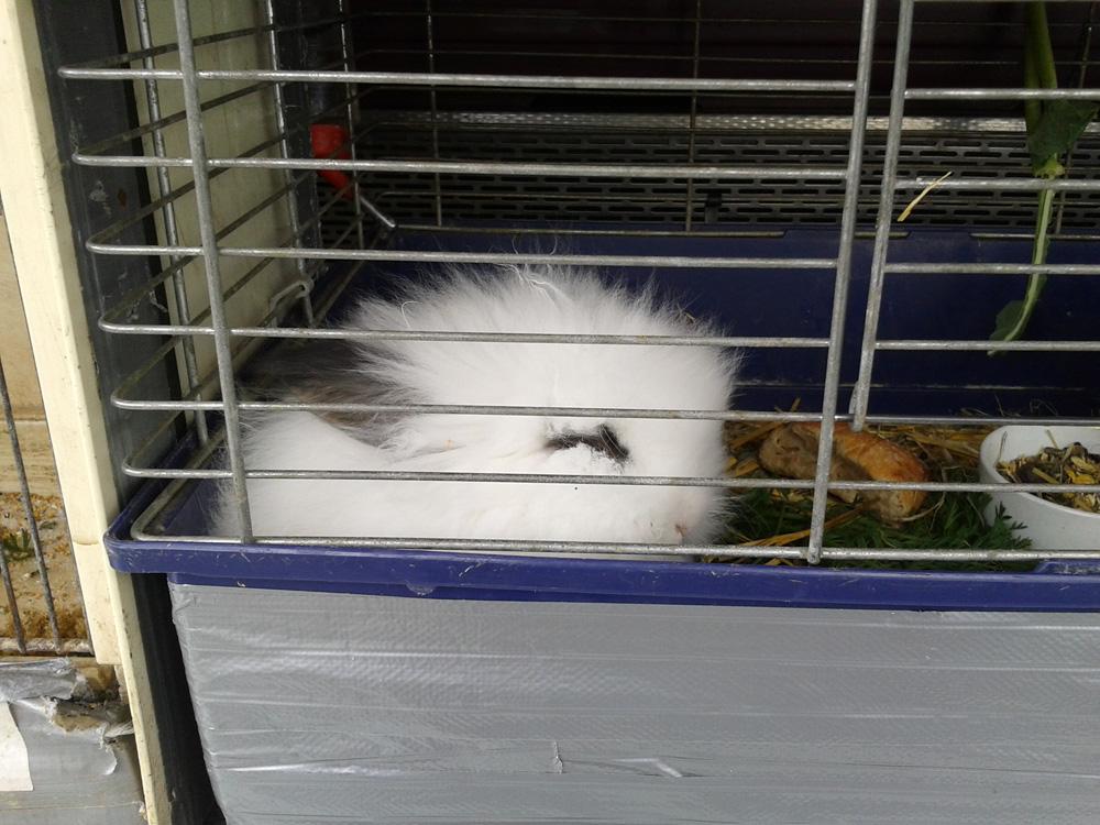 Kaninchen auf einem deutschen Tiermarkt