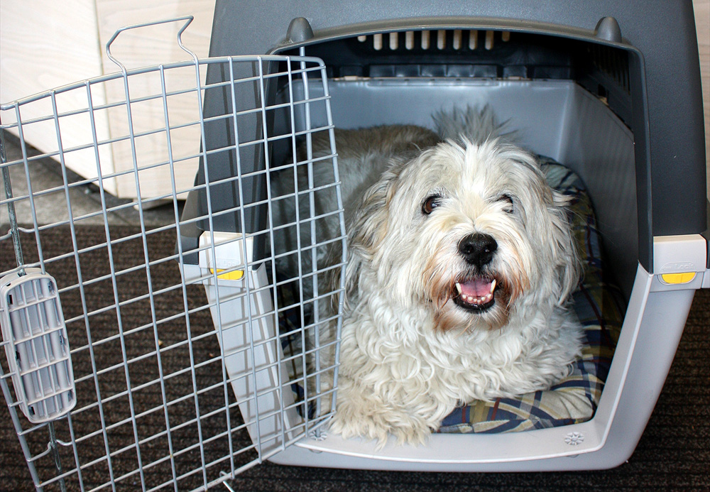 Hund 'Sweety' in der Transportbox