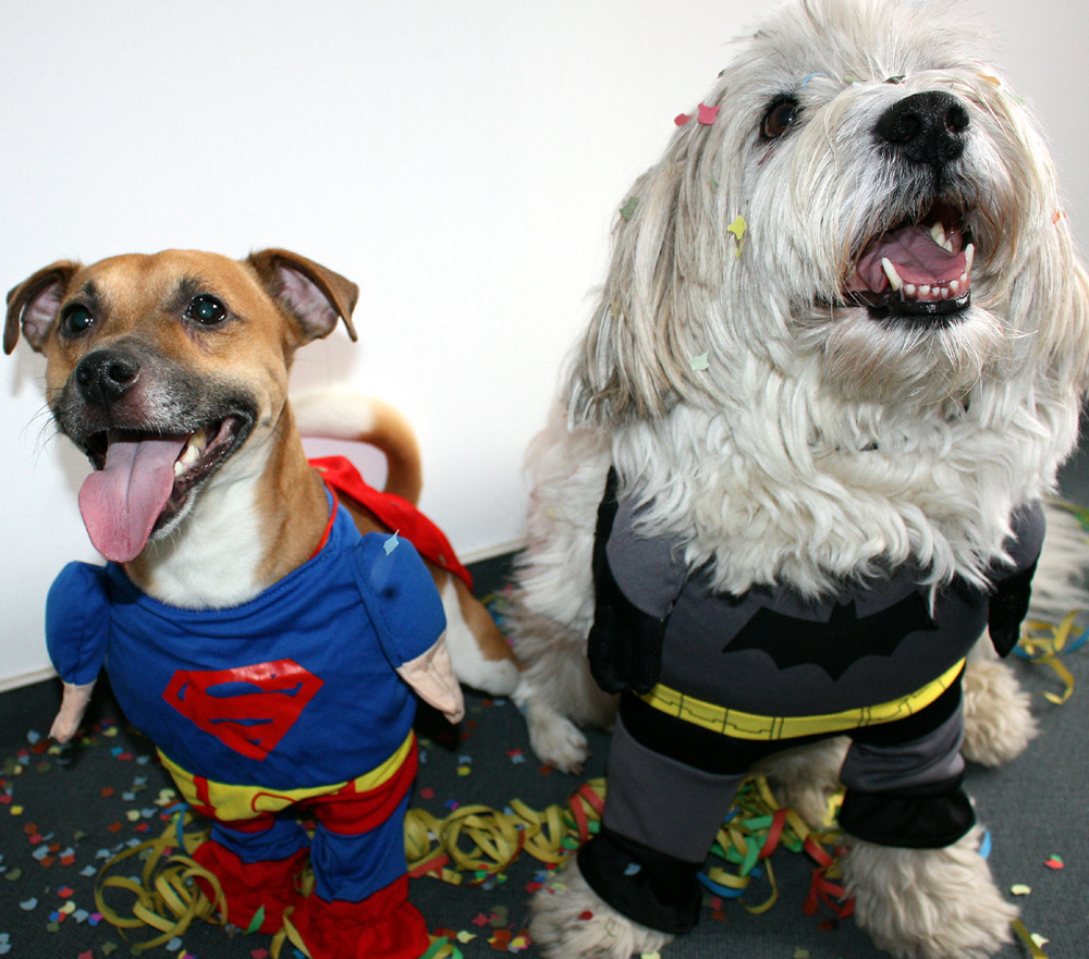 Hunde im Faschingskostüm