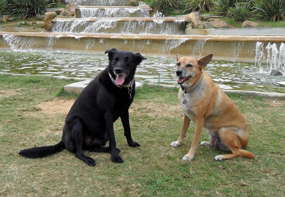 """Vor allem ältere Menschen und """"Hundeanfänger"""" sollten über die Aufnahme eines älteren Tieres nachdenken!"""