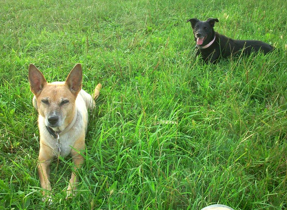 """Ältere Hunde sind oft schon genügsamer und fordern """"ihren Menschen"""" nicht mehr so heraus."""