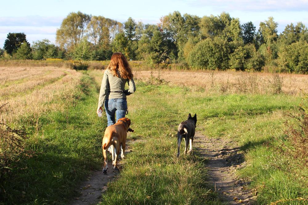 Lange Spaziergänge, Hundeschule, Spielen - Hunde kosten außerdem viel Zeit, die man erübrigen können muss!