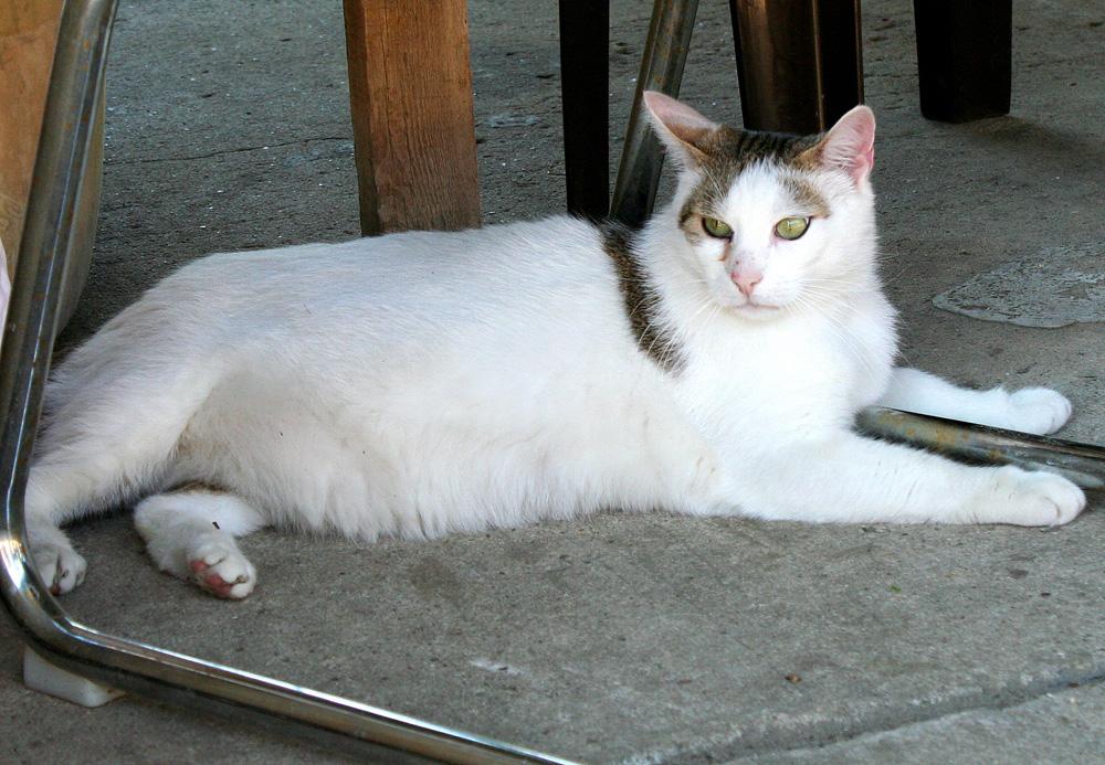 Übergewichtige Katze.