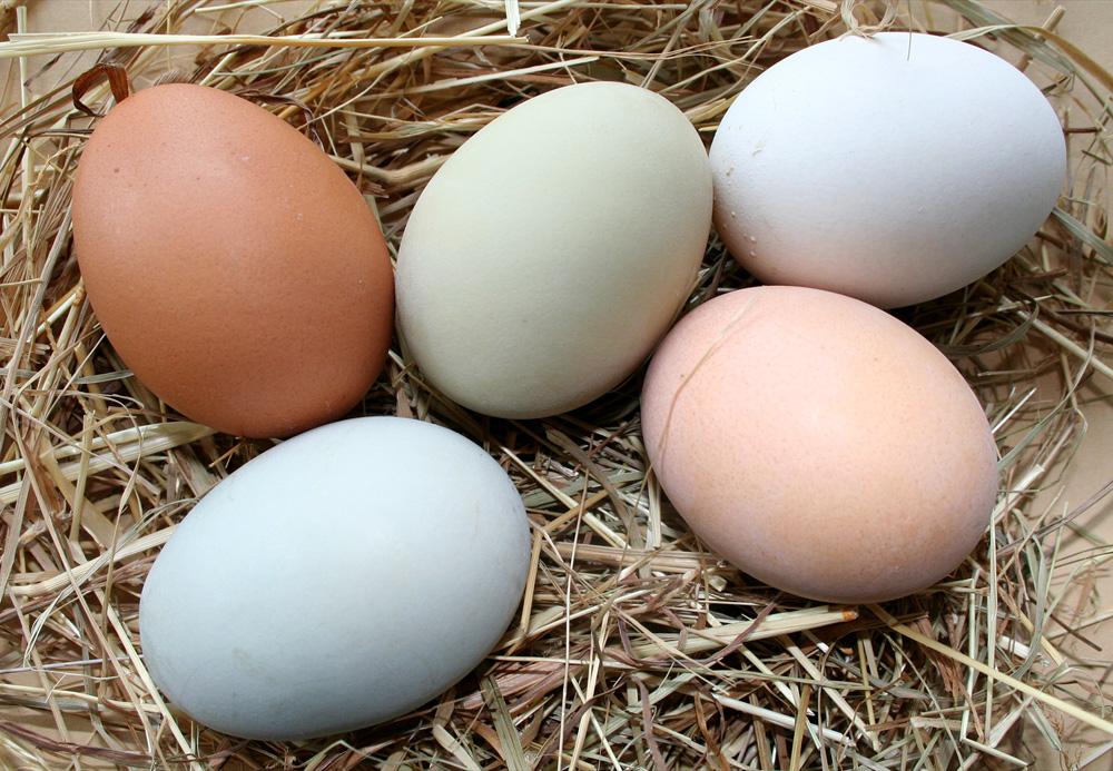 Verschiedenfarbige Hühnereier